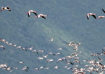 3 Day Best Of Kenya's Rift Valley Lakes Birding Tour