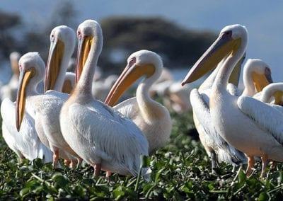 Group Birding Tours in Kenya