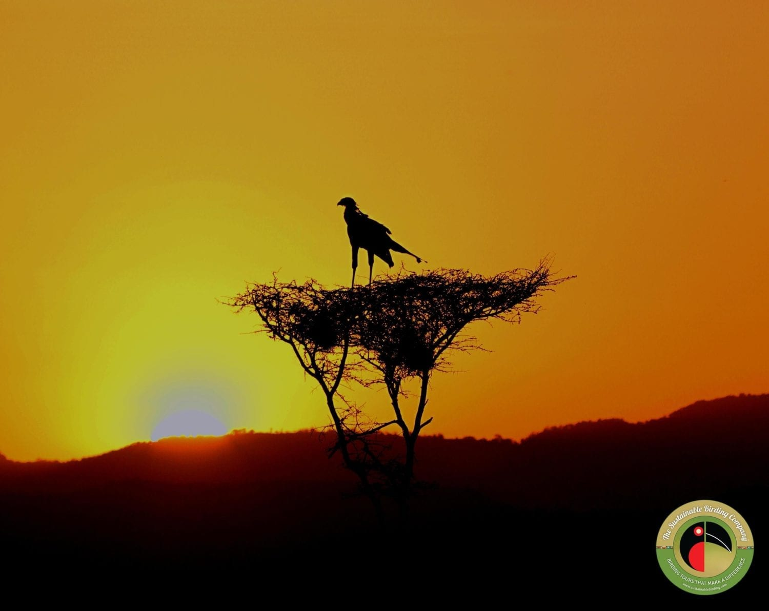Glorious African sunsets on our Kenya Birding Tours