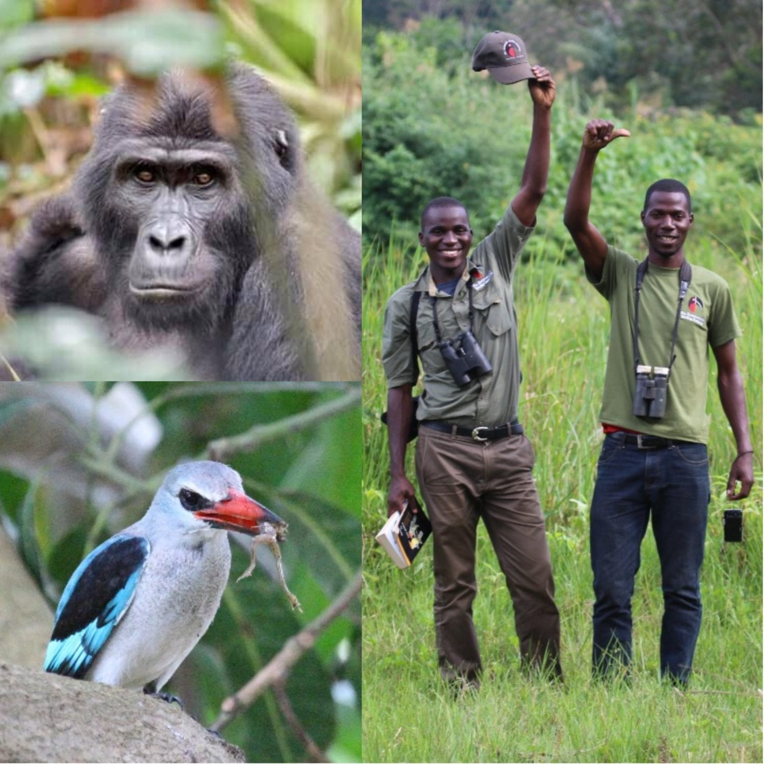 Join us at Mgahinga Gorilla National Park on our Uganda Birding Tours