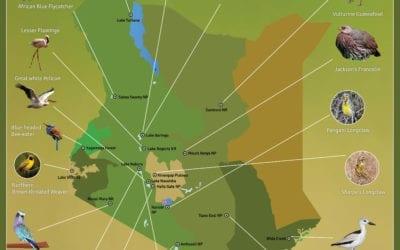 NEW Kenya Birding Map!
