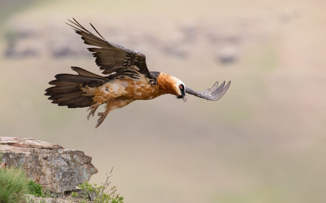 3 Day Best of Eastern Ethiopia Birding Tour