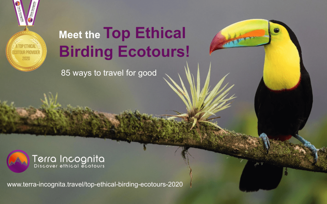 Nominated as a Top Ethical Birding Ecotour Company in 2020!
